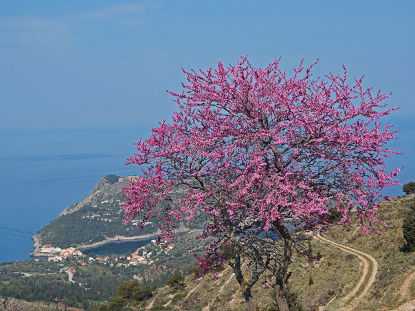 Photo Gallery Kefalonia Grecia